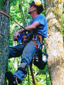 Suffern tree service climber