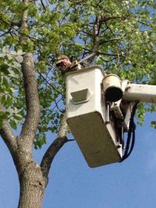 Tree pruning for rockland coumty and norhtern bergen