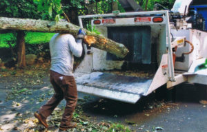 Emergency tree service in rockland county ny