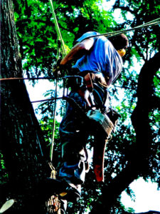 Tree removal rockland county and northern bergen